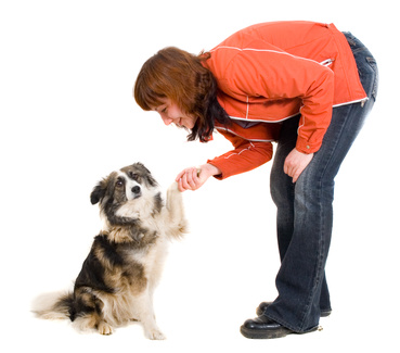 Dog Training Tip: Why Do Your Dogs Bark