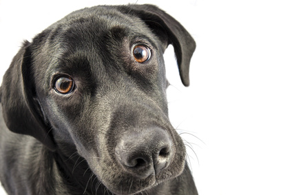 What You Need To Know About Dog Treats