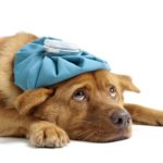 dog illness symptoms
