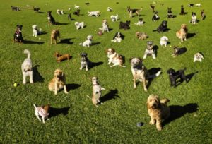 dog personality types