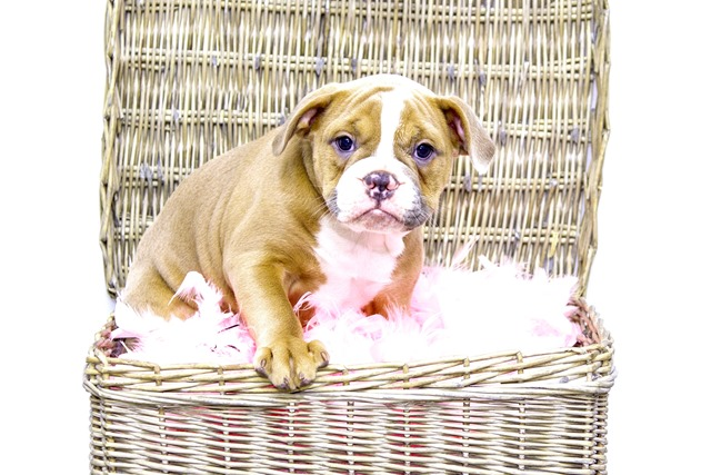 what is the easiest dog to potty train